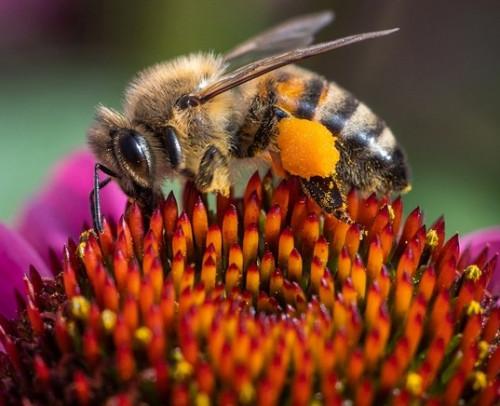 schutz für Bienen und Insekten